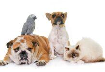 Az állatok endokannabinod-rendszere